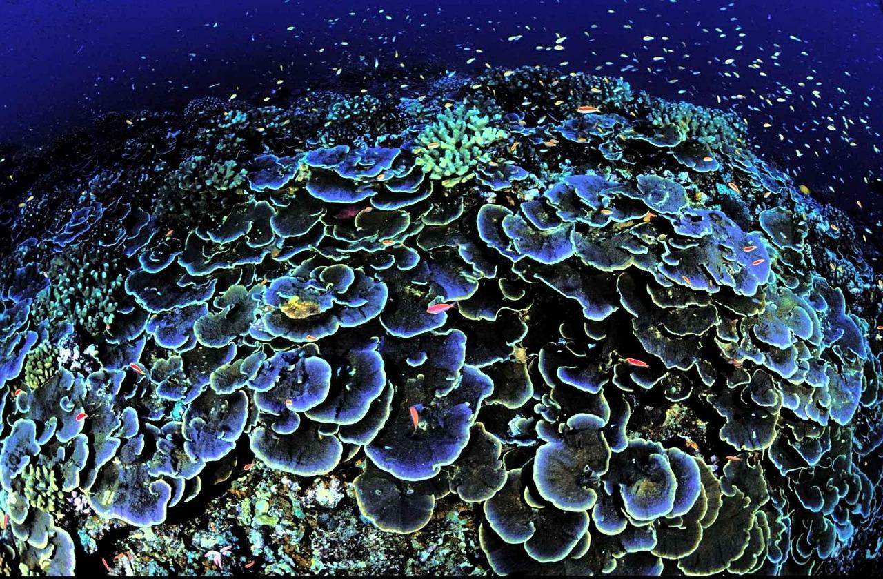 corail madagascar