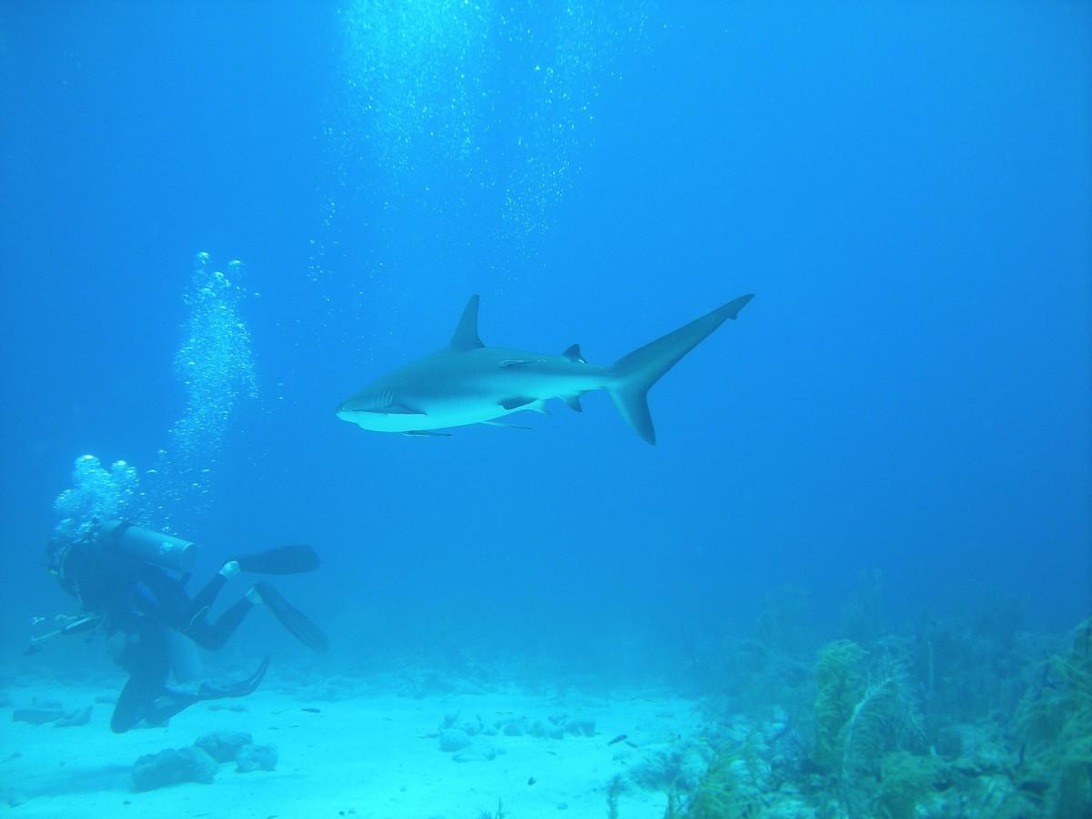 plongee requin soudan