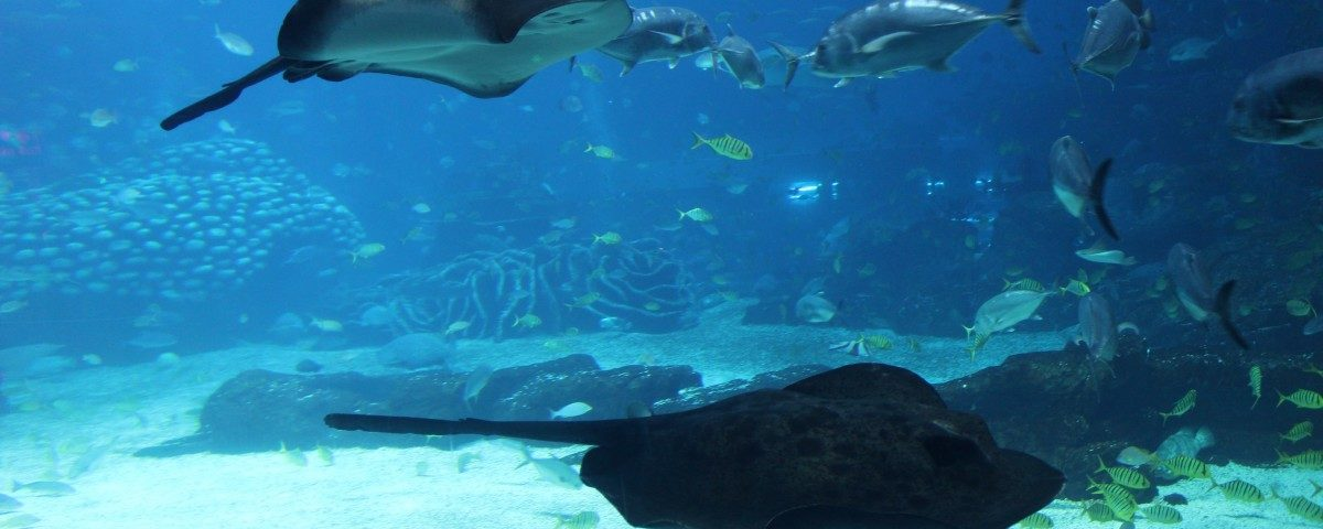 requin egypte