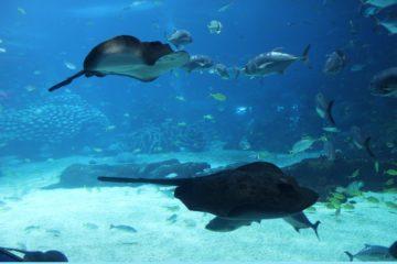 requin egypte