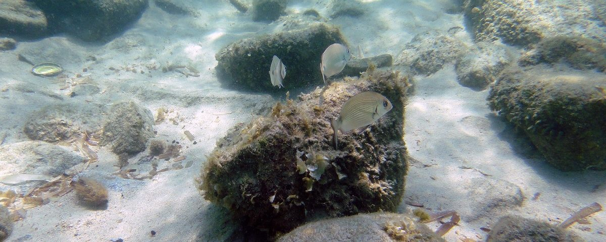 La vie sous marine dans toute ses états