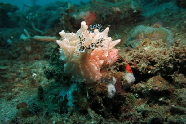 Les espèces que l'on découvre lors de votre plongée
