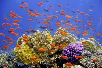 Les sites de plongée sur l'Île Maurice
