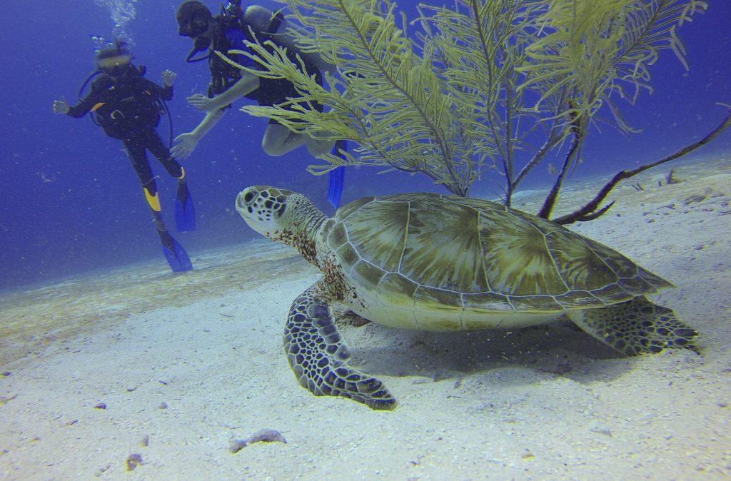 Animaux marins à l'Île Maurice