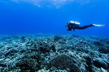 faire de la plongée sous-marine en hiver.