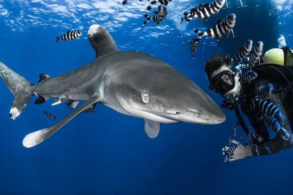 Attaque de requin en plongée.